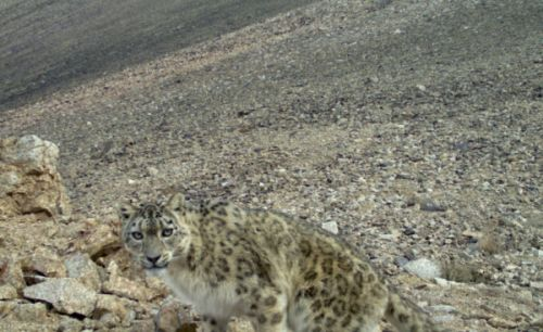 Slow Conservation and Slow Journalism Converge in the Pamirs of Central Asia