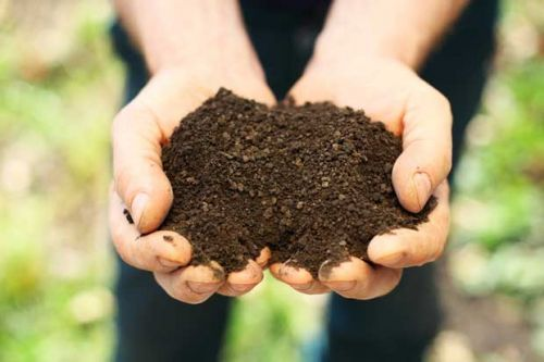 8 facts you need to know about soil