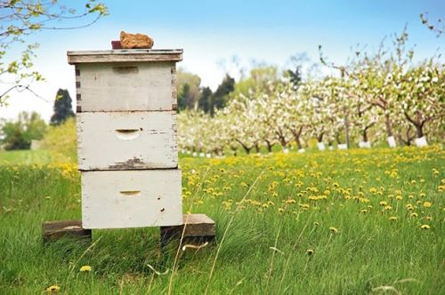 Bee expert Karen Knight on how to find an ethical beekeeper
