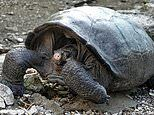 'Extinct' Giant Tortoises found in the Galapagos Islands
