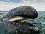 'Whale Whisperer' Christopher Swann's sea life photos