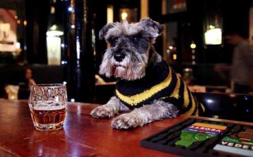 Britain's 25 most dog-friendly pubs: the perfect end to a weekend walk
