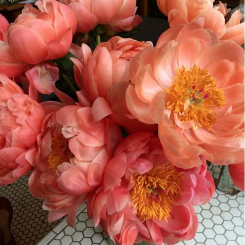 10 Of The Prettiest Peony Varieties To Plant In Your Garden