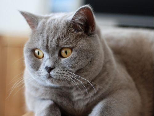 Listen up right meow: A cat festival is coming to London