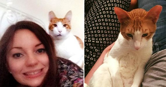 Woman tracks down her missing cat after uploading its photo to Tinder