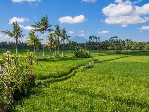 How to Get an Indonesia Visa Extension in Bali and Stay up to Six Months