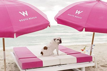 Miami Beach welcomes travelers and their pets