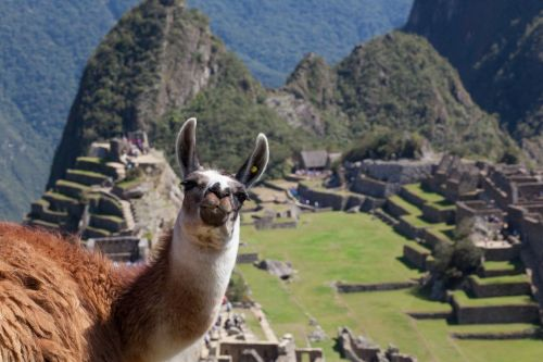 If you want to do the Inca Trail next year, you'd better book soon