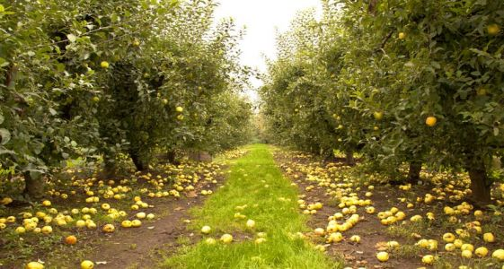 7 Best Spots for All-American Apple Picking