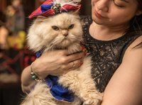 The Algonquin Hotel's Cat Fashion Show Is Paw-sitively Purrfect