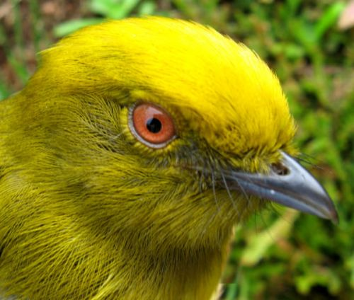 The Value of Birds in Colombia's Post-Conflict World
