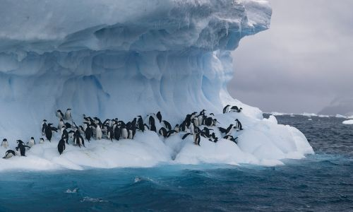 Antarctica as a traveller: It's easier than you think - here's how