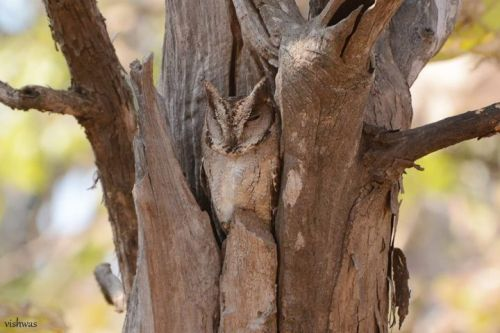 Top 25 Wild Bird Photographs of the Week: Camouflage