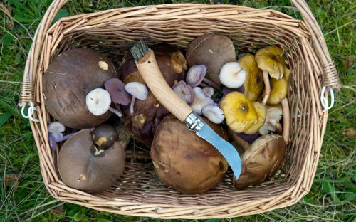 'If you can't name it, don't pick it': the golden rules of foraging mushrooms and the top funghi to spot in the UK