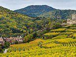 Exclusive for Mail on Sunday readers: Get a taste of Alsace with Saturday Kitchen's Matt Tebbutt