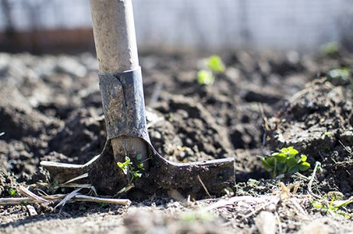 Gardening This Weekend? These Are The 4 Gardening Basics That Every Beginner Should Know