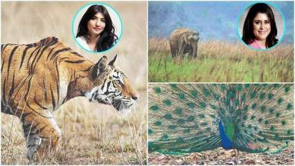 Conversations between humans and the wildlife
