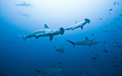 Where to emulate Jacques Cousteau: the world's best dive sites