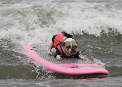 Look at all the amazing doggos competing at the World Dog Surfing Championships