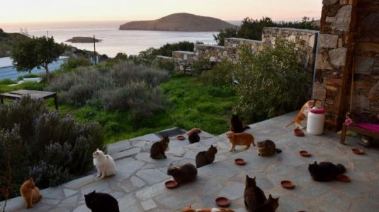 Love cats? Island in Greece is looking for you with now-viral ad