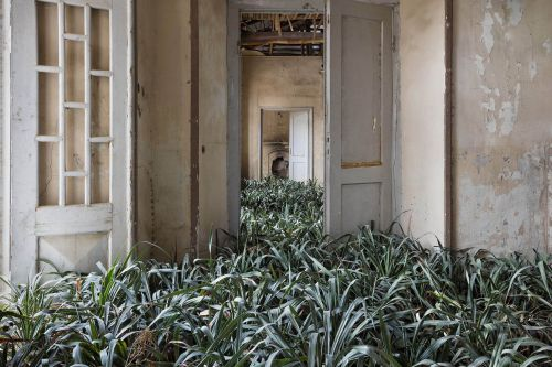 Haunting photo series captures plants taking over abandoned homes