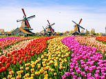 Exclusive for Mail on Sunday readers: See Holland's tulips next spring with TV's Adam Frost