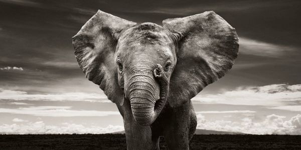 Elephants rescued from poaching photographed in stunning series