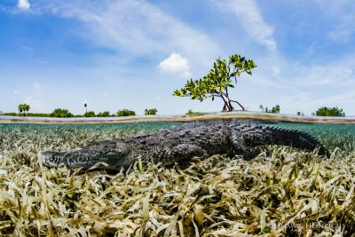 Cuba - Gardens of the Queen: The Last Stand for Caribbean Reef Systems
