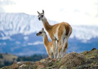 Beauty and Adventure in Patagonia