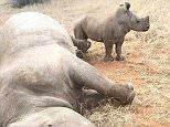 DNA evidence used to catch Rhino poachers in South Africa