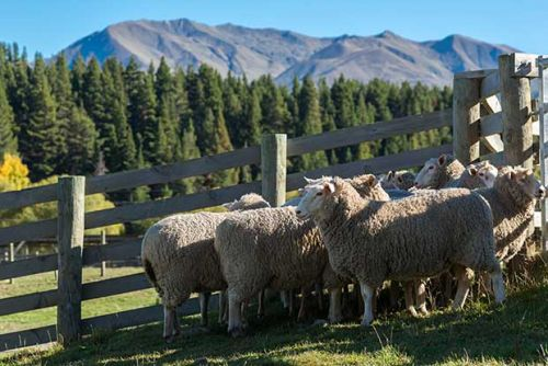 Innovative New Zealand companies develop profitable future for NZ wool industry