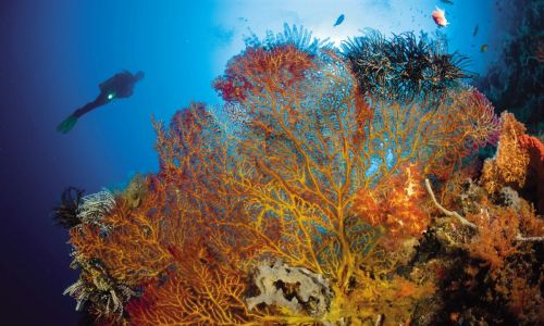 Why Papua New Guinea is one of the world's best diving destinations