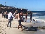 Fisherman saves a beached shark's life by carrying it back into the sea in 'beautiful' moment