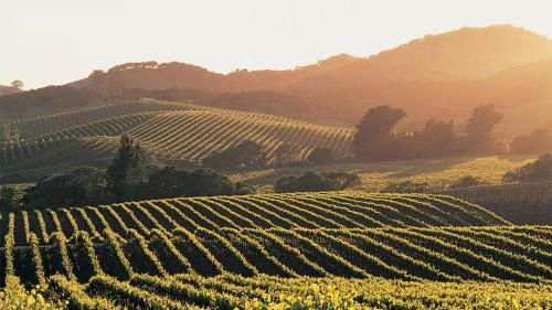 Dreaming of Napa, California on this TravelTuesday? We have