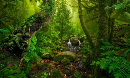 The world's most awesome rainforests and how to visit them