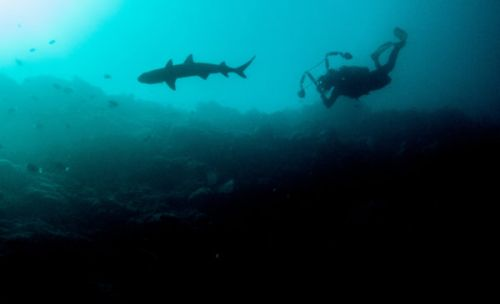 Diving With Borneo Sharks: Shark Sanctuary or Slaughterhouse?
