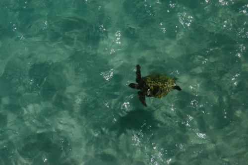 An Island Crucial For Sea Turtles Has Washed Away