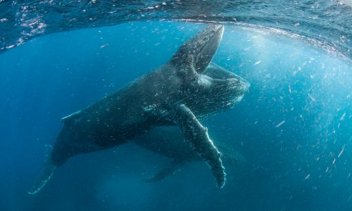 14 nature and wildlife documentaries you can watch now