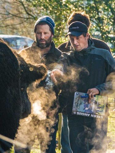 Behind the scenes of the annual celebration at Stern Angus Stud's historic on-farm auction