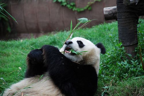 8 Adorable Animal Experiences to Add to Your Bucket List