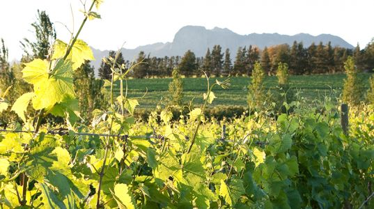 The Best Way To Spend Two Days In South Africa's Winelands