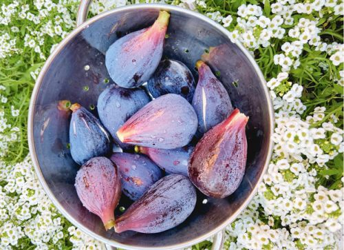 How to get the most from a fig tree - and why some fig trees just won't fruit