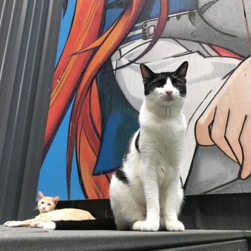 Furrytail Of New York - Which cat cafe should you visit in the Big Apple?