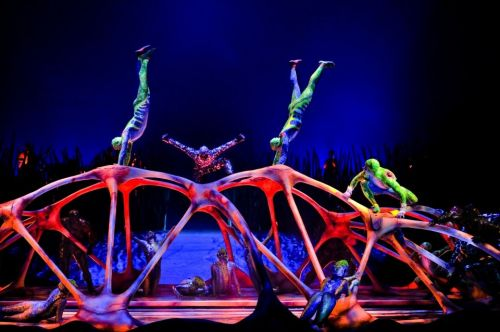 A longtime Cirque du Soleil performer falls to his death as a crowd watches