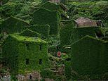 Incredible images show China's eerie 'ghost village' completely swallowed up by plants