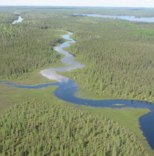 Cool Forests Conference Puts Boreal Forest on World Stage