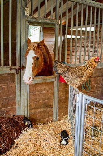 How artificial lights can extend your hen's working year