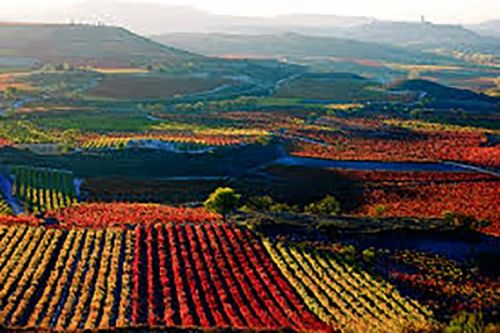 6 Spanish Wines that Punch Above Their Price Tag
