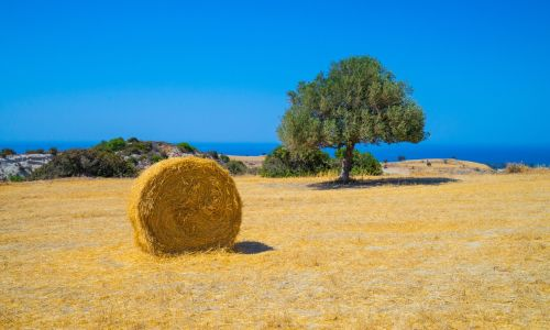 5 rural experiences you will love in Cyprus