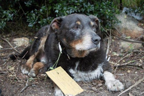 Family had no idea their dog was a hero - until they found a note on his collar